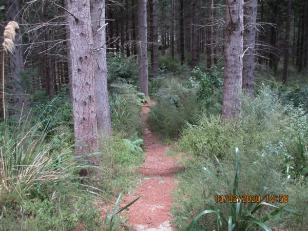 The walking track to the lake off Castle Rock Road