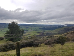Views from Darkys Spur Road