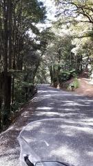 Hailes - Whananaki South Road
