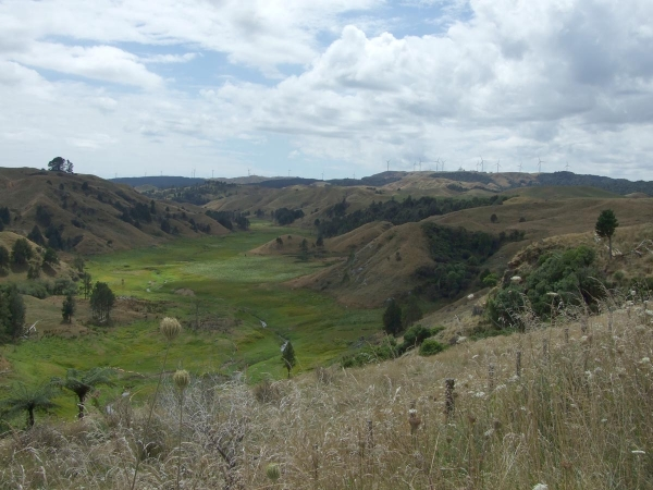 Valley Views from Kawhia Road with windmills in the background