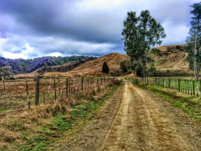 Kiwi Road