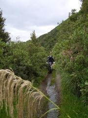 Makairo Track