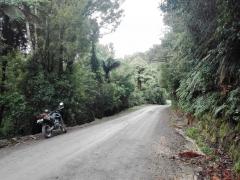 Mangatoi – No 2 Roads