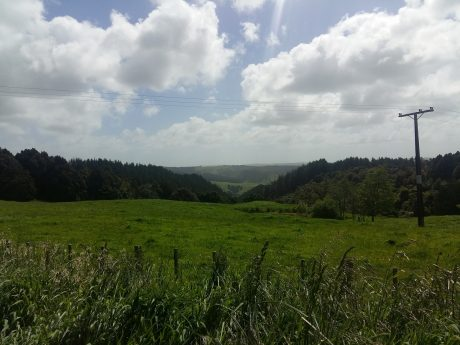 Views from Otorohaea Trig Road