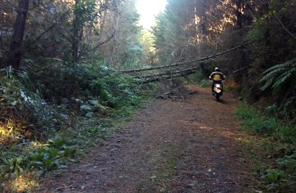 A fallen Tree on Pikowai Road