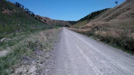 Pongakawa Bush Road