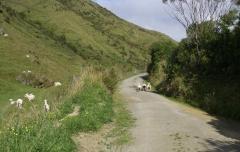 Puketoi Road