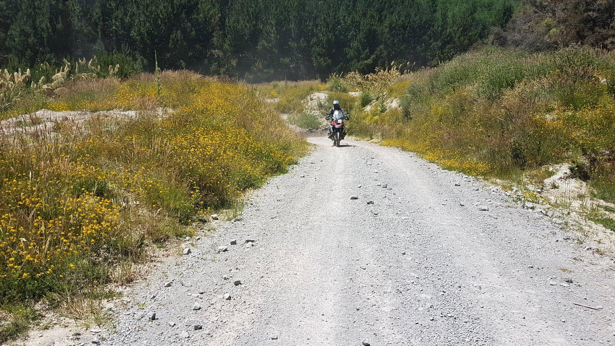 Tracks in SF70 Rangitaiki Conservation Area