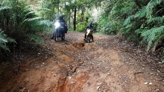 Takahue Saddle Road
