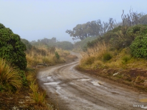 Heading into the clouds on Takapari Road