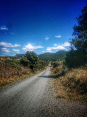 Te Akau Coast Inland Route