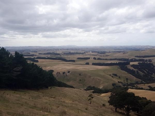 More views from Te Uri Road