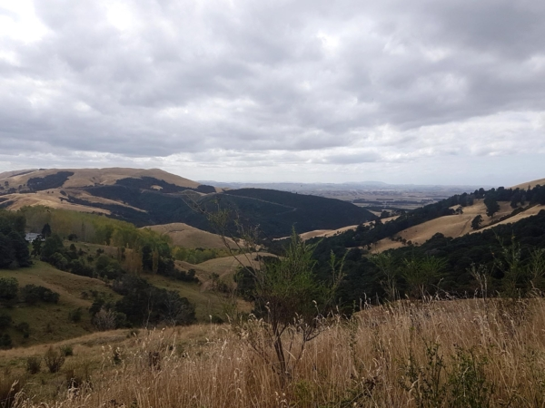 Views from Te Uri Road