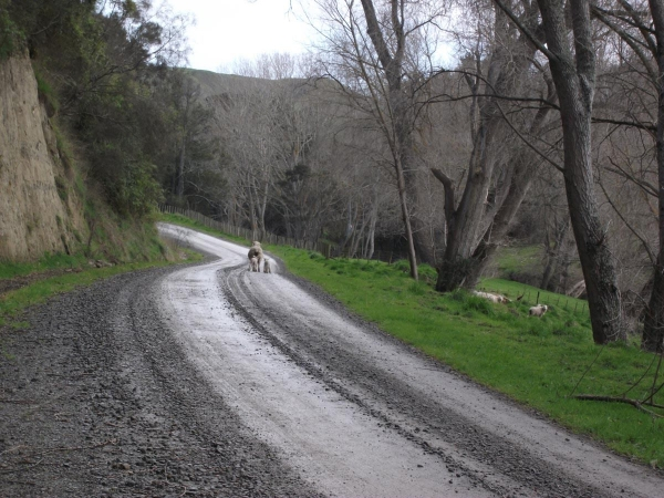 Locals on Turakina Valley Road