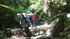 Crossing a log on Vandy's Road