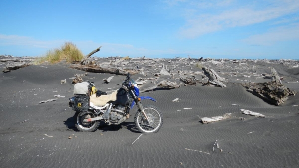 Skeletal trees washed up on Whangaehu Beach