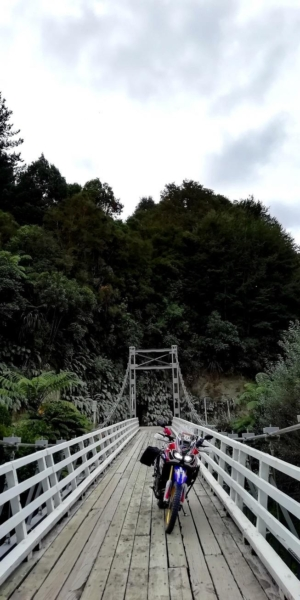 Whanganui Forest Loop