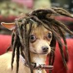 Profile picture of Ruahinereddog